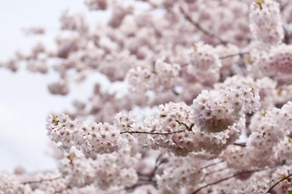 桜 出会い マッチング 引っ越し 始まり コワーキング